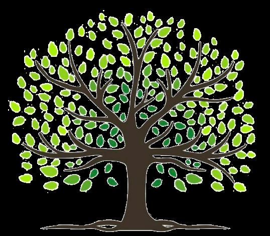 Image Arbre vert